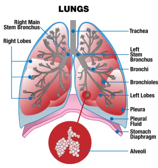 Exercises to Combat Exercise Induced Asthma